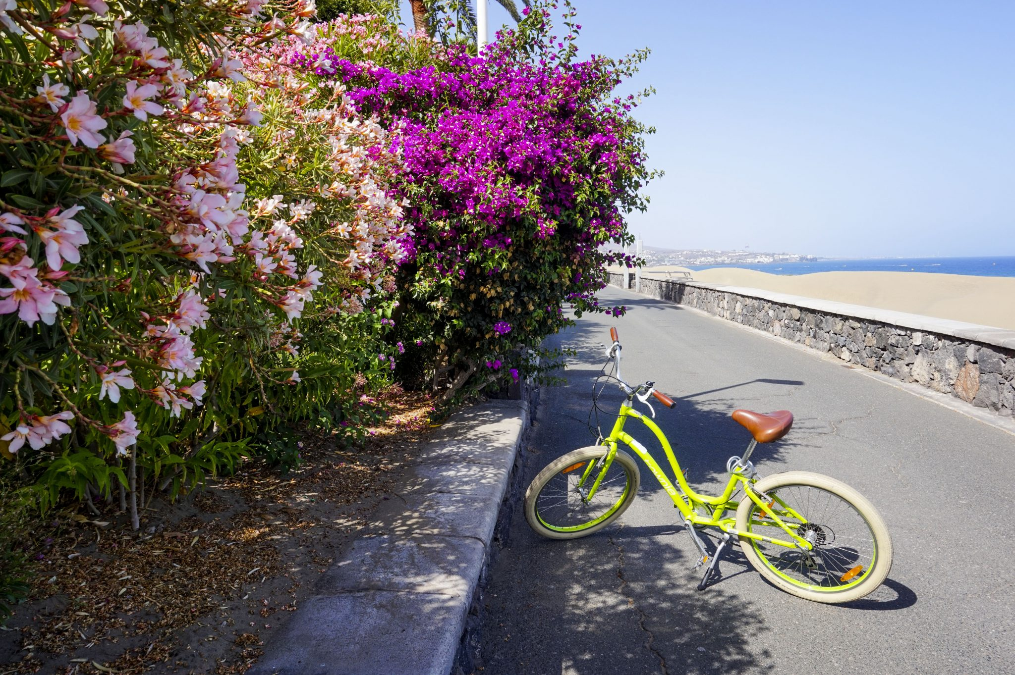 green electra bikes in maspalomas dunes purple flowers