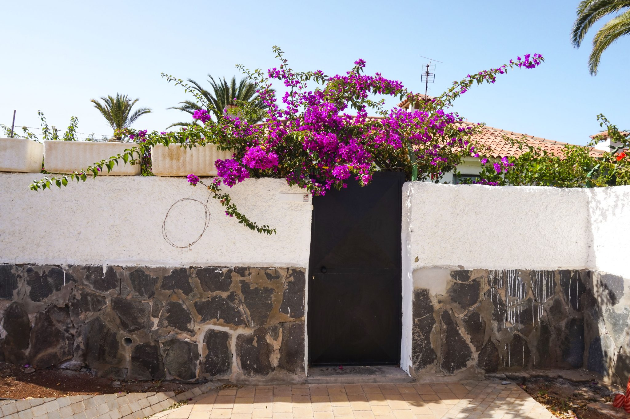 cute door with purple flowers in gran canaria